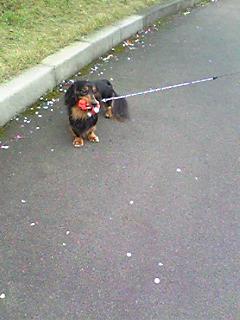 散歩のお供?