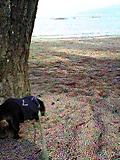 砂浜を散歩